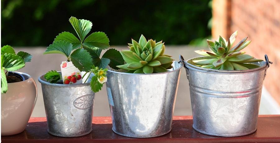 Ako si vypestovať zeleninu na balkóne?