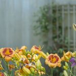 Tipy na moderné doplnky do záhrady